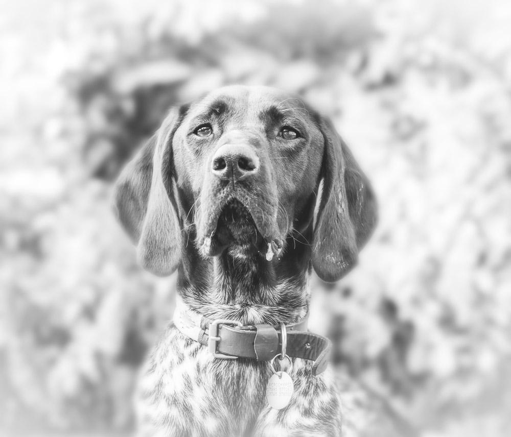 Natural_Dog_Photography_Sussex_Surrey.jpg
