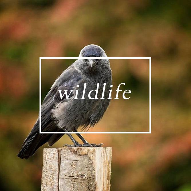 award winning pet and wildlife photographer serving brighton, Chichester, horsham