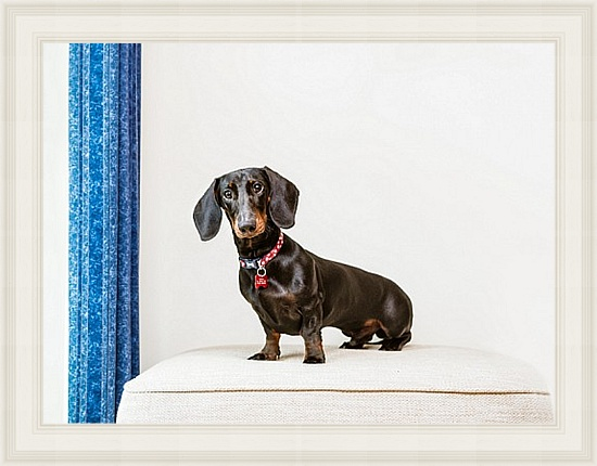 Pet Dog Photographer East Sussex