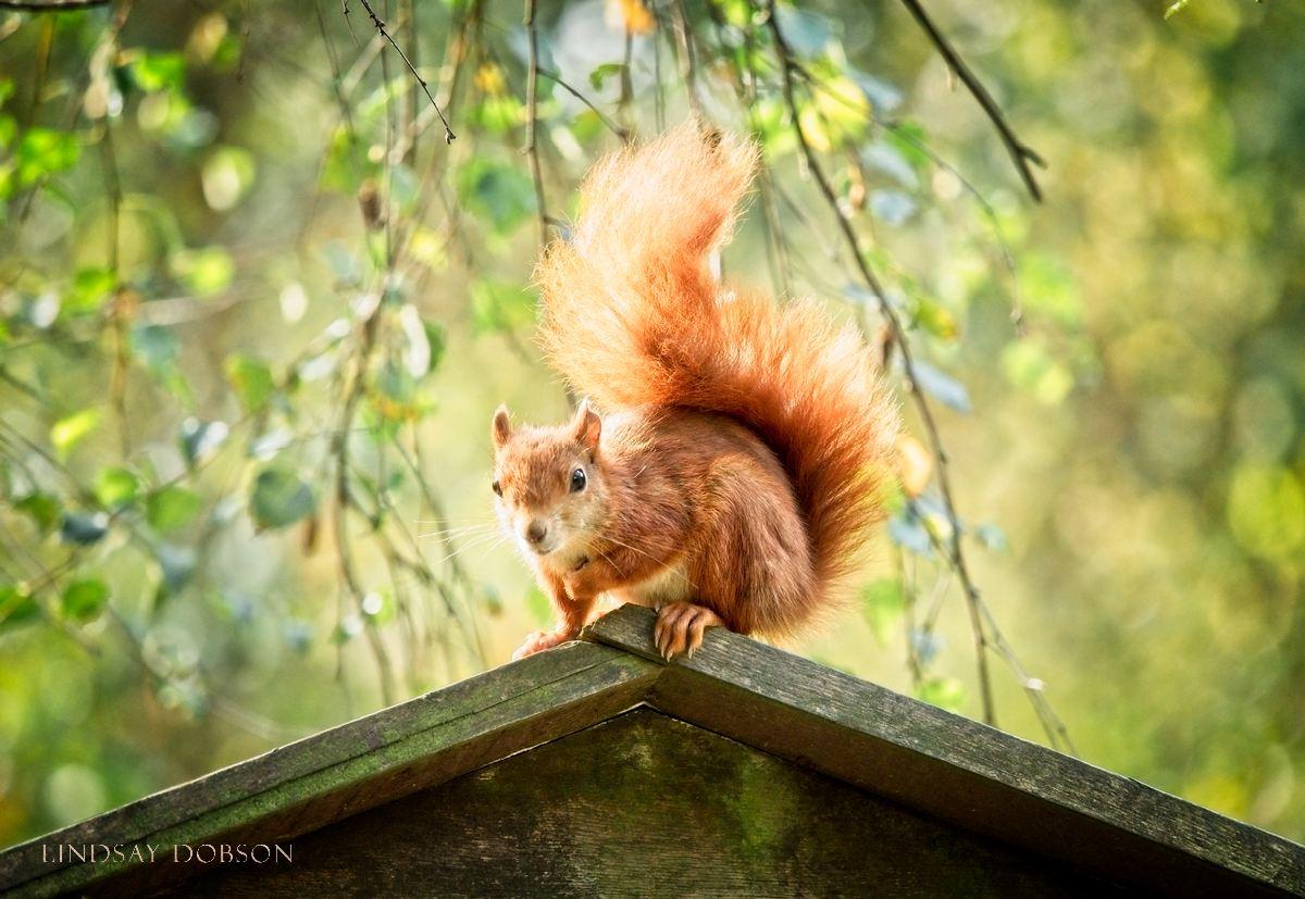 Wildlife Photography Training at the British Wildlife Centre Surrey copy1.jpg