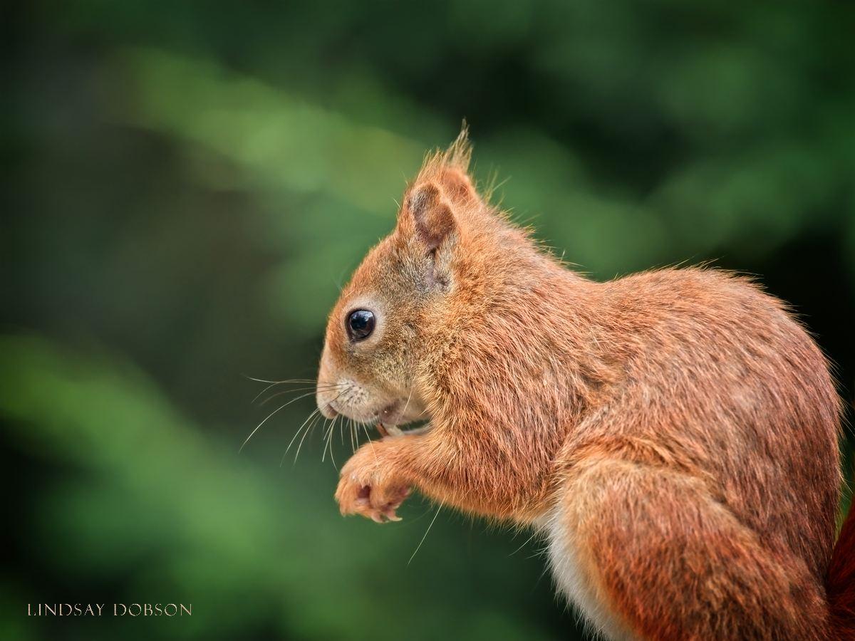 Wildlife Photography Training at the British Wildlife Centre Surrey copy3.jpg