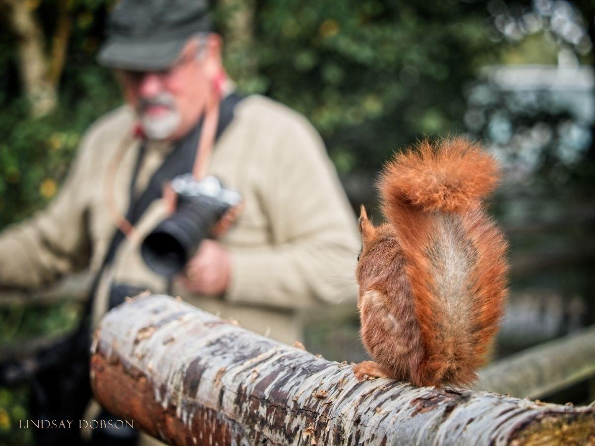 Wildlife Photography Training at the British Wildlife Centre Surrey copy5.jpg