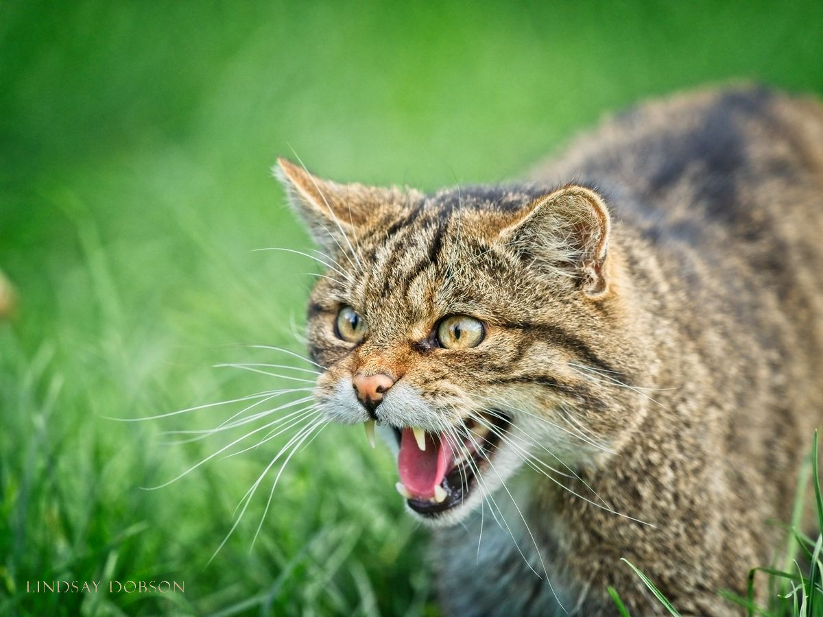 Wildlife Photography Training West Sussex and Surrey
