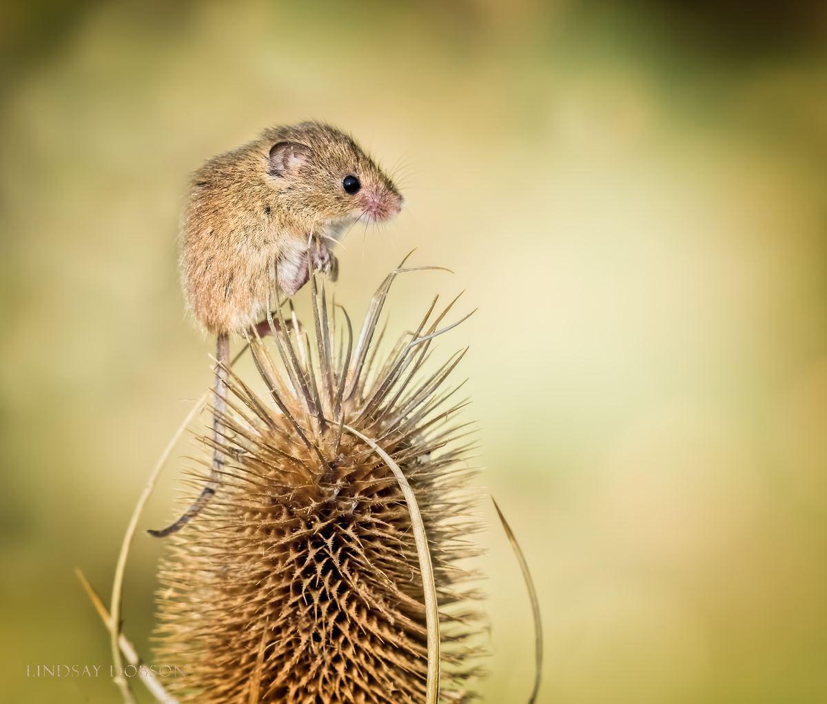 Wildlife Photography Training at the British Wildlife Centre Surrey copy20.jpg