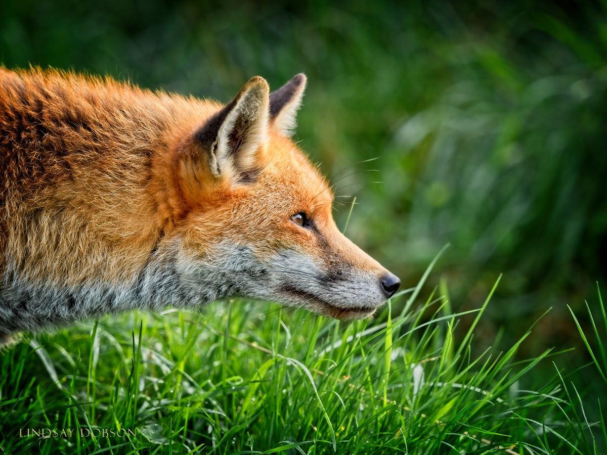 Wildlife Photography Training at the British Wildlife Centre Surrey.jpg