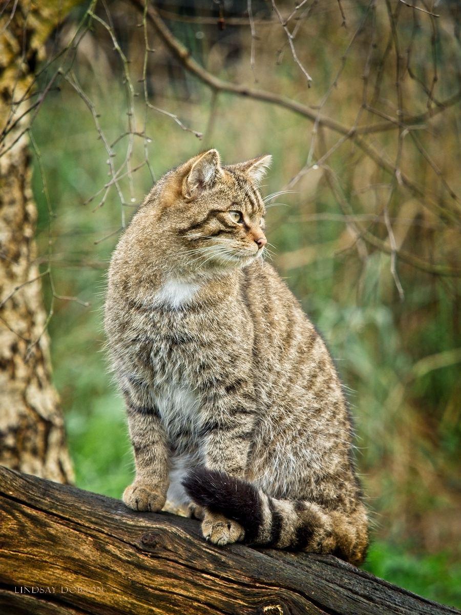 Cat photographer West Sussex and Surrey