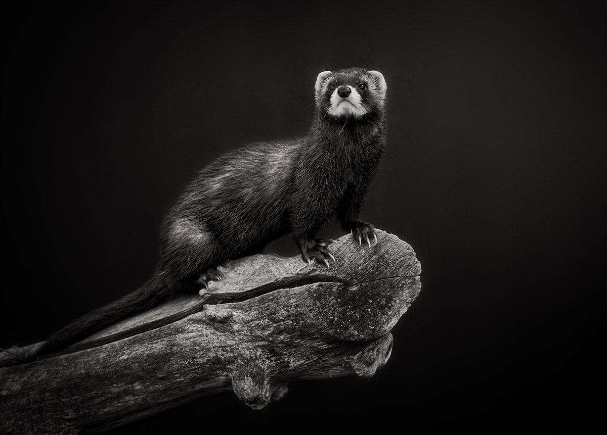 Fellow-of-the-British-Institute-of-Professional-Photography-Pet-Photographer-Sussex.jpg