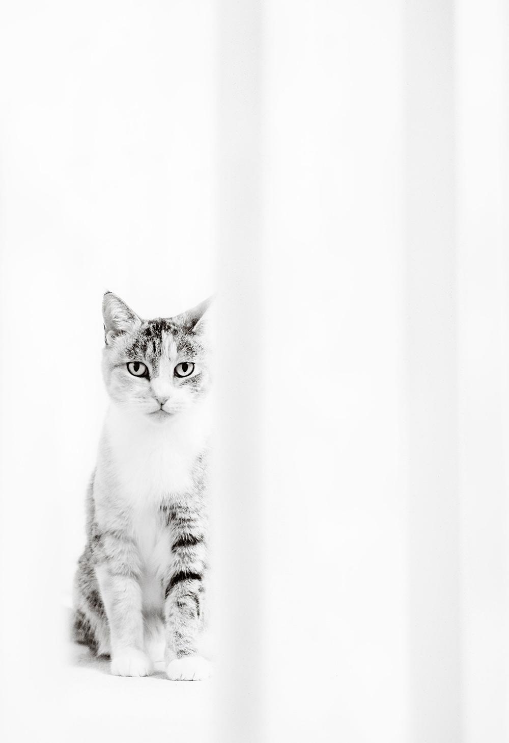 Pet Cat Portrait Photography West Sussex