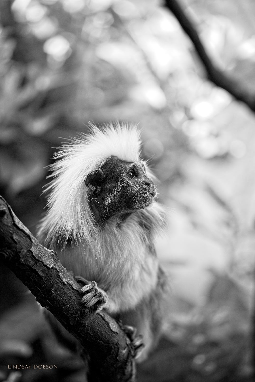 Tips on Photographing Captive Animals in a Zoo