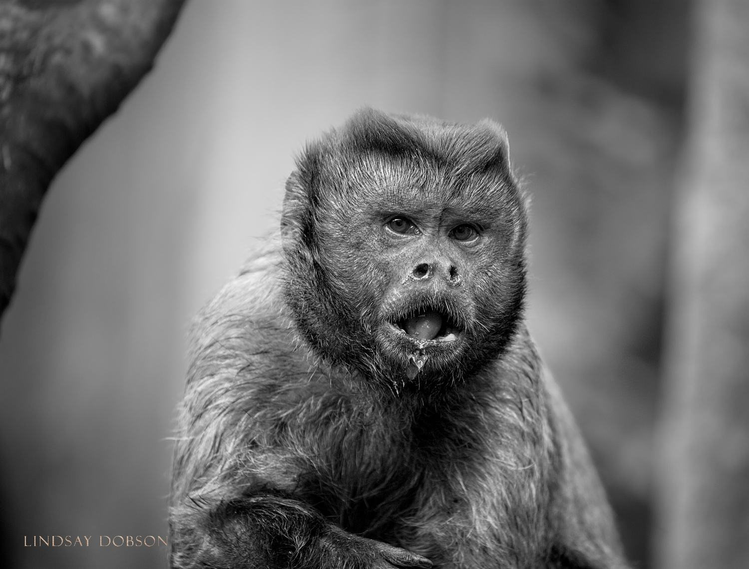 How to Photograph Animals in Zoos copy9.jpg