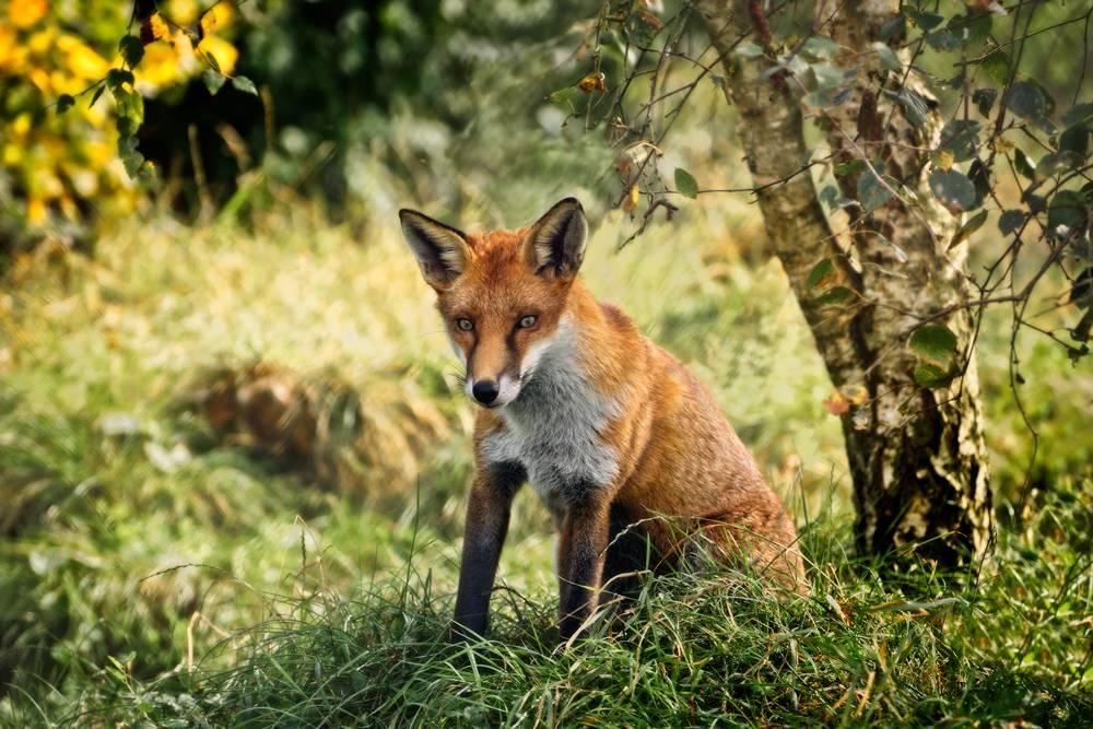Award Winning Wildlife Photographer West Sussex and Surrey