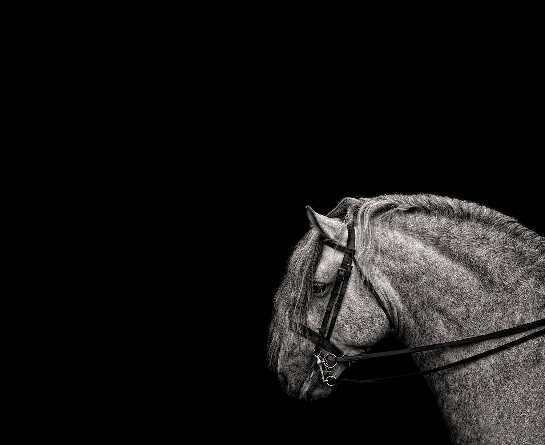 Fine Art Horse Photographer Guildford Surrey