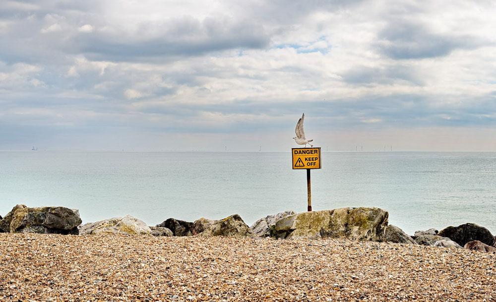 Herring Gull Worthing Beach