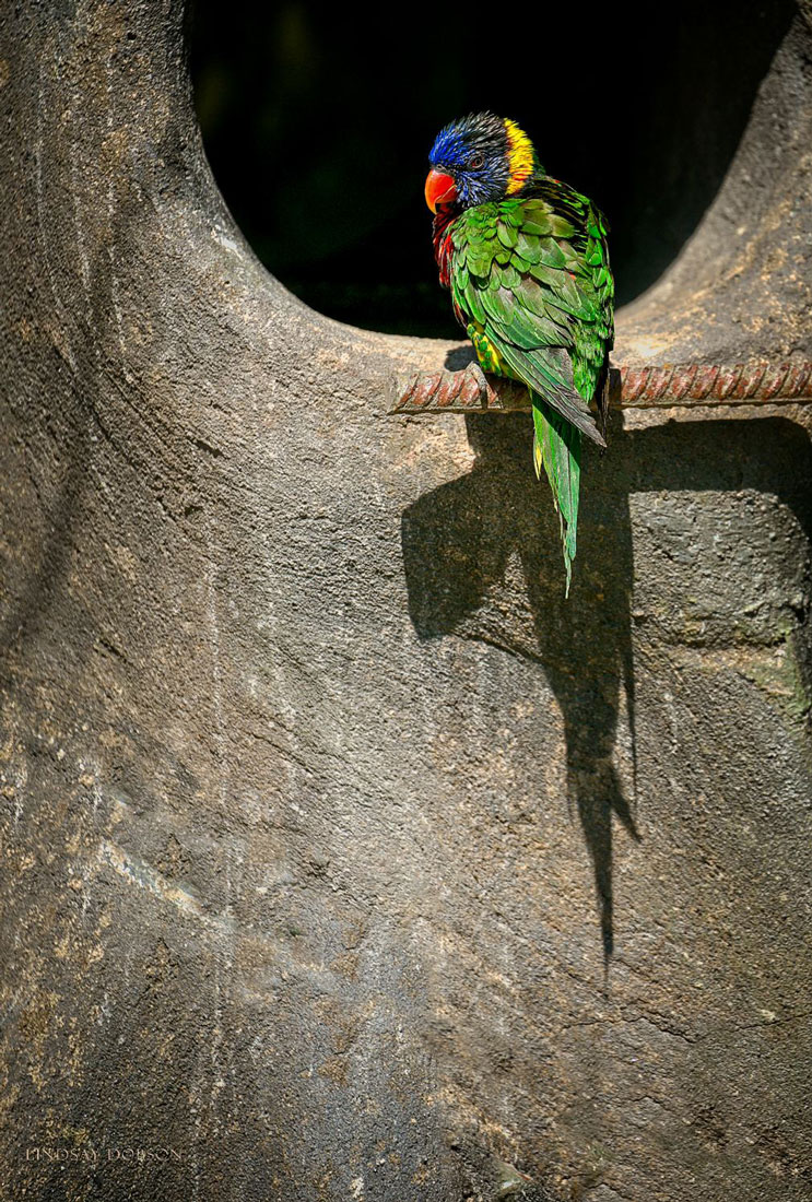 How-to-Photograph-Animals-in-Zoos-copy25.jpg