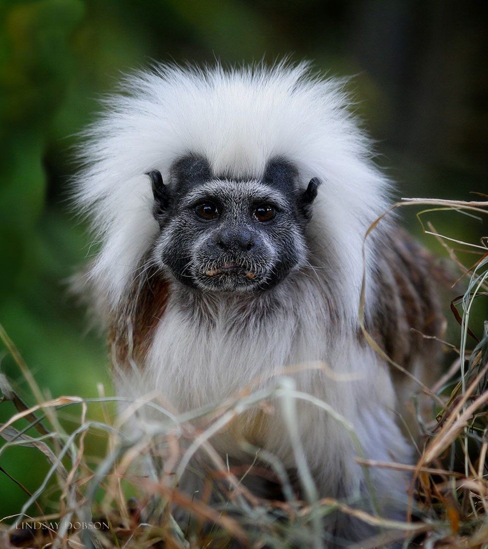 How-to-Photograph-Animals-in-Zoos-copy46.jpg