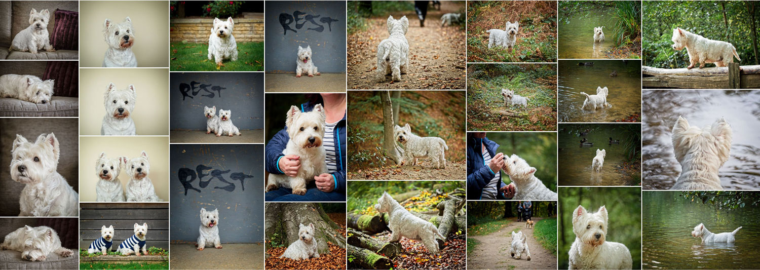 Dog Photographer West Sussex Creative Pet Photography on Location