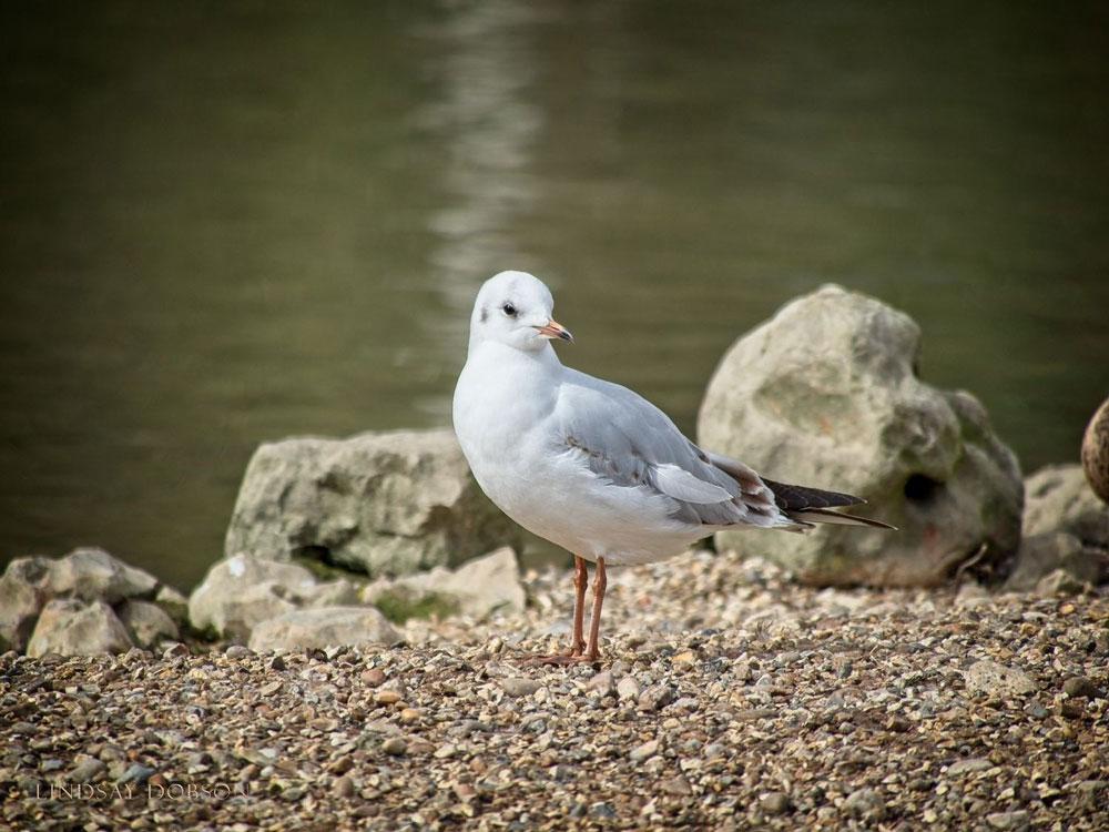 Panasonic-100-300-Lens-Bird-Photography-Field-Review-copy.jpg