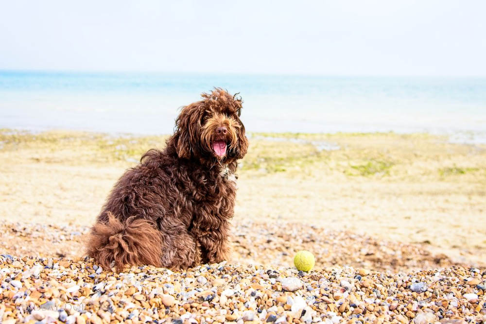 Pet and Family Photography Worthing West Sussex copy28.jpg