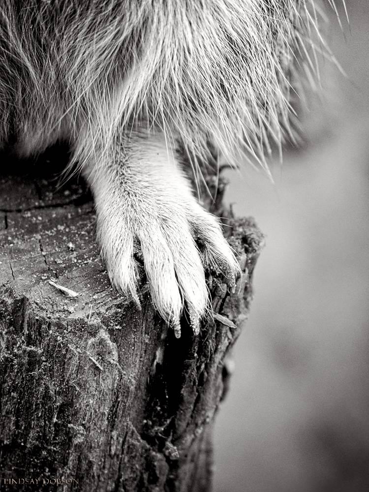 meerkat--wildlife photography-sussex-018.jpg
