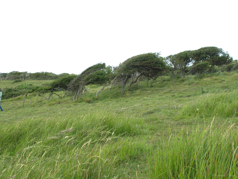 [10]_2009-Wind-Fugue-Tree-Katherine-E-Bash.jpg