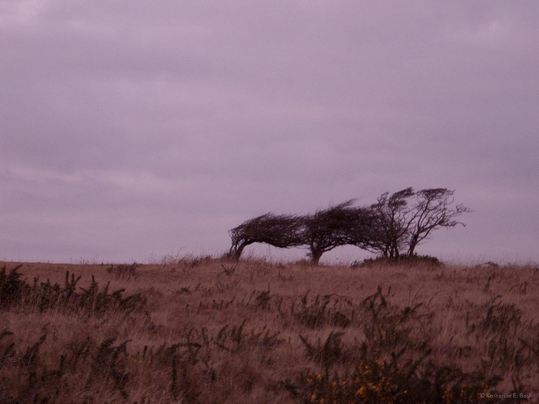 [8]_2009-Wind-Fugue-Tree-Katherine-E-Bash.jpg