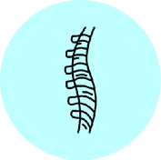SPINE.png