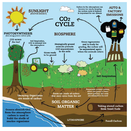 Image courtesy of the Carbon Cycle Institute