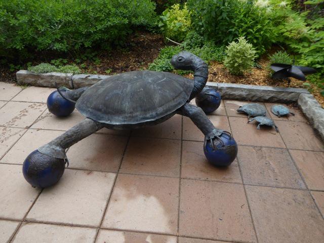 Angry-Turtle-copy-copy.jpg
