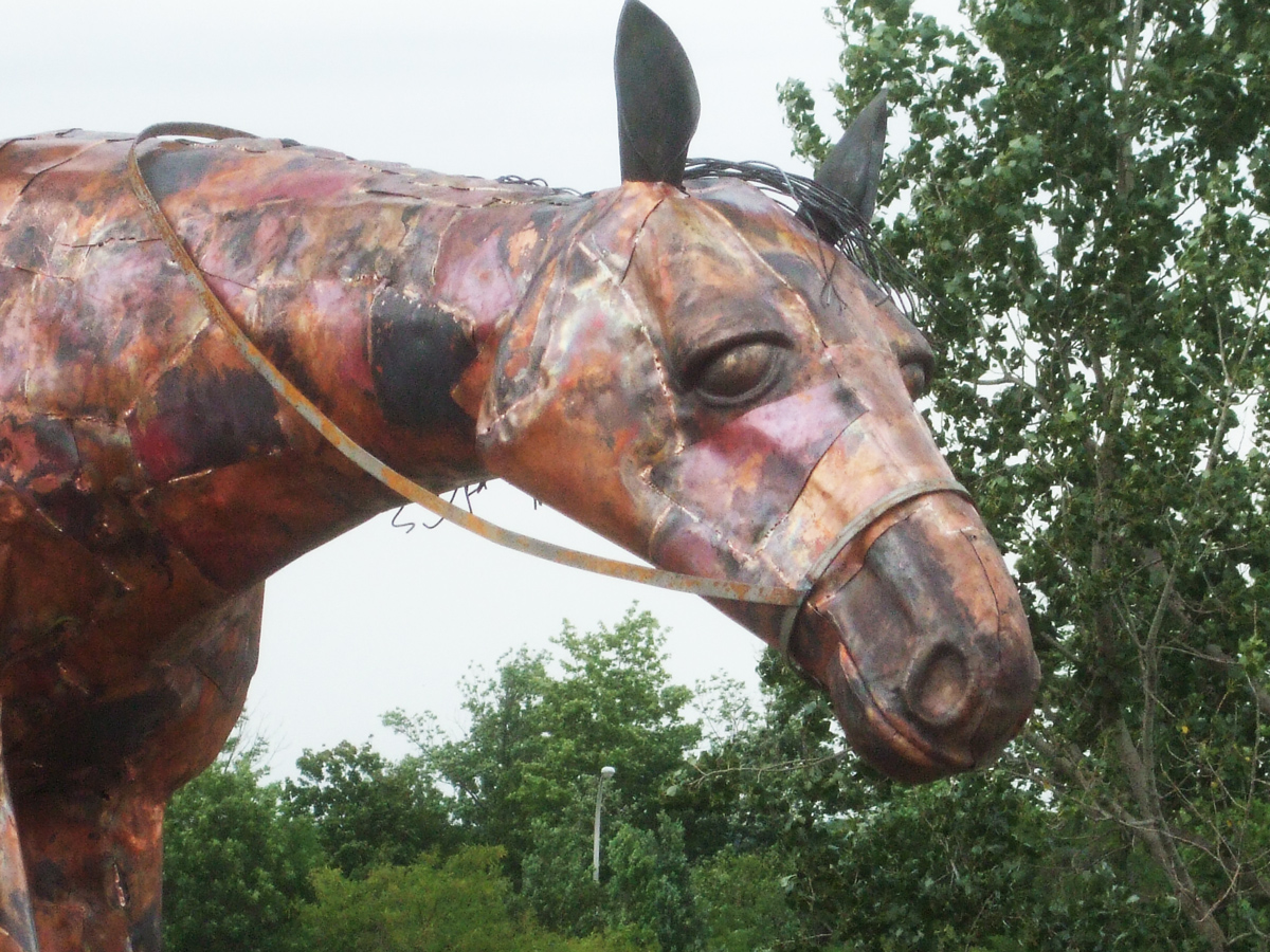 Horse's-Face-copy.jpg