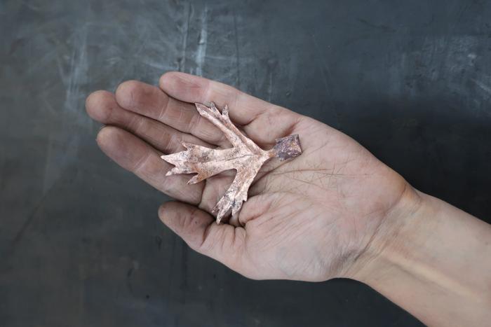hand-leaf.png