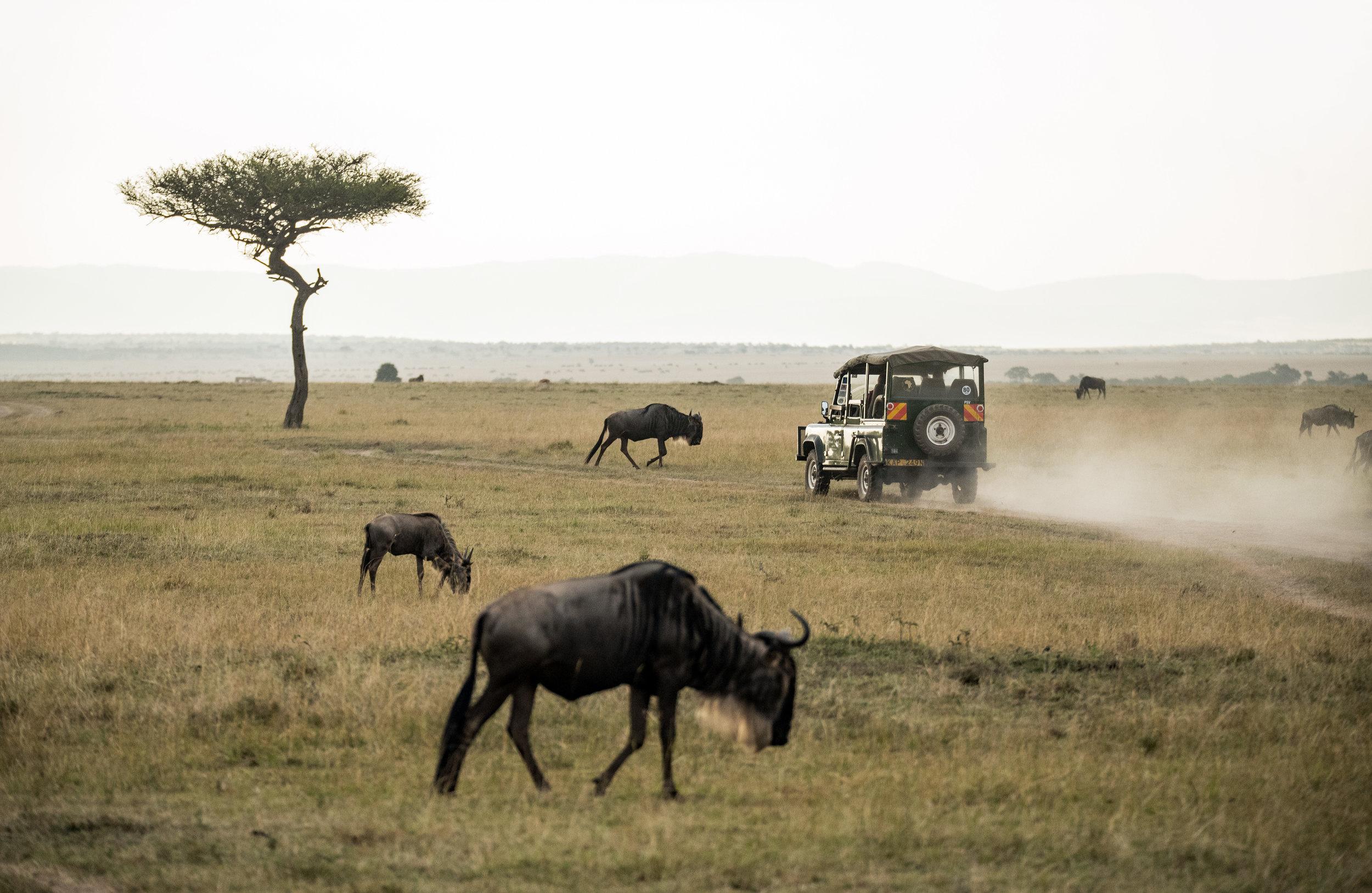 parque nacional da gorongosa -