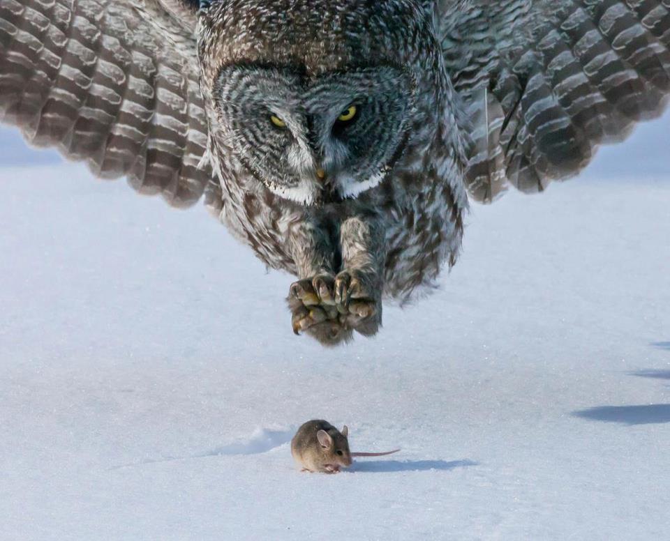 predator vs prey.jpg