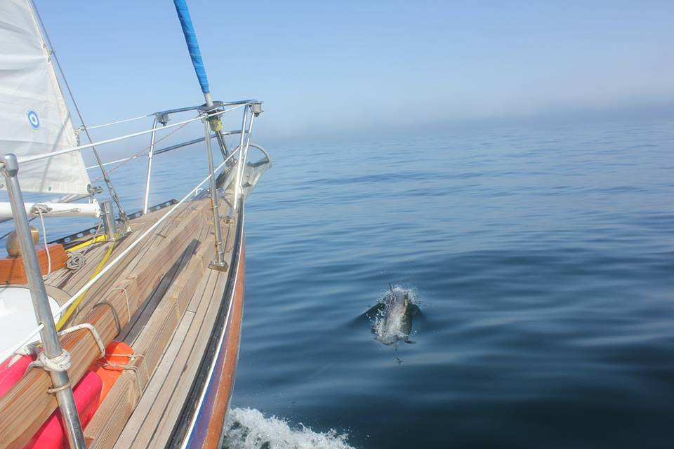 I hope I never get tired of watching dolphins swim in the bow wake. I love watching them play.