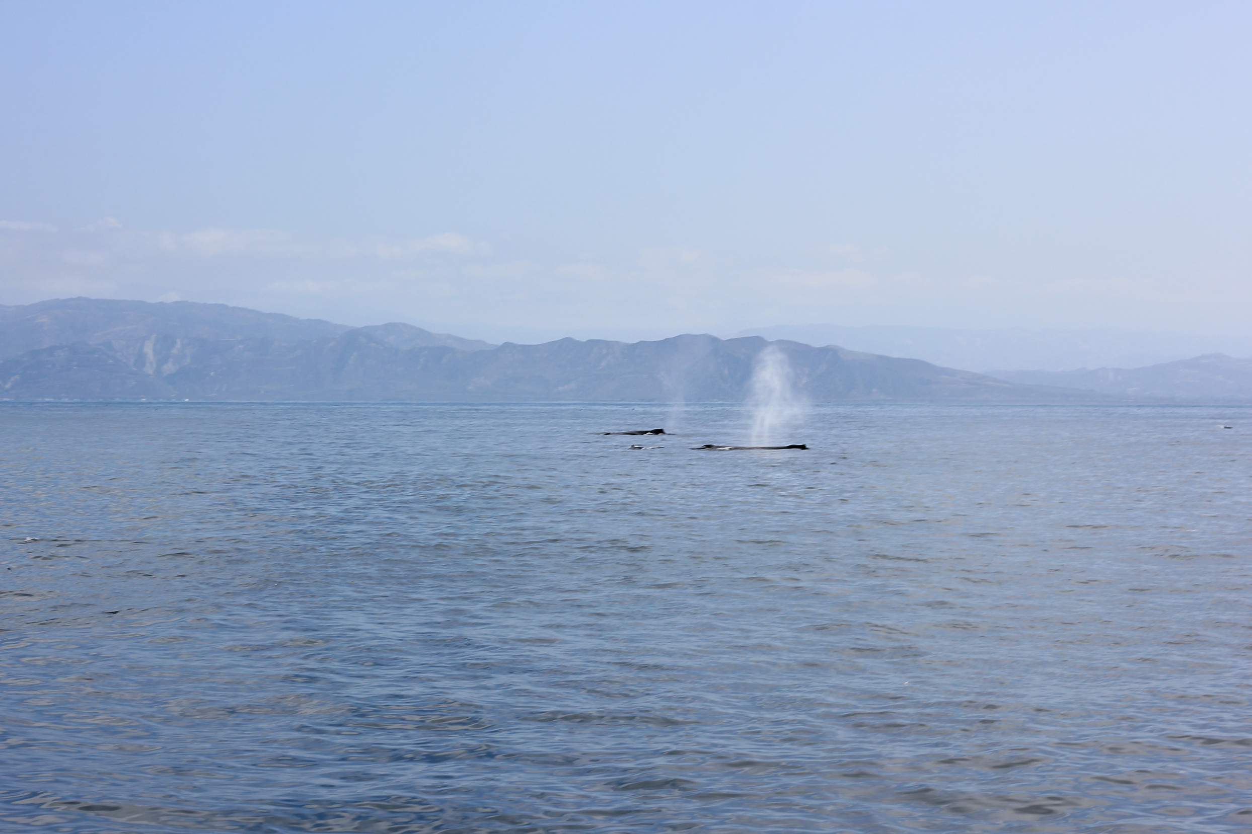 More whales swimming alongside Agape.