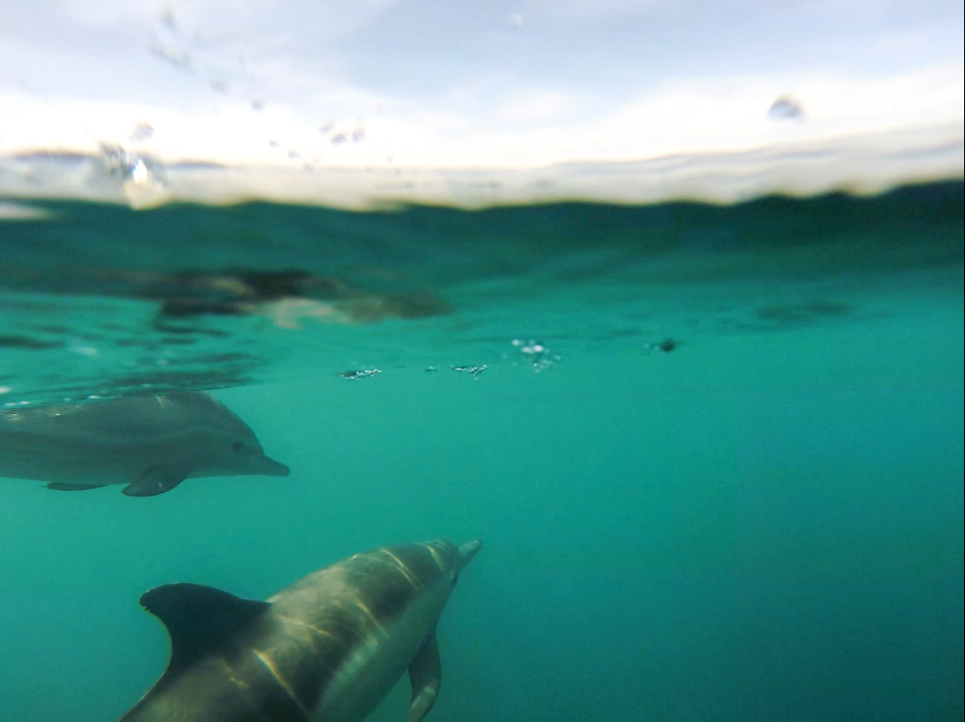 Dolphins playing off our bow!