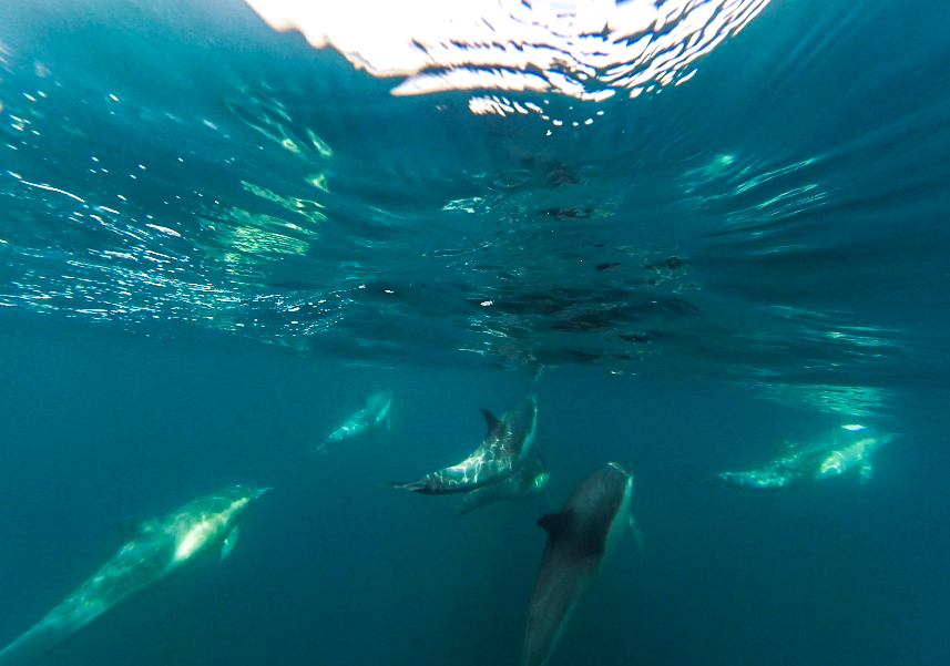 Dolphins playing off the bow.