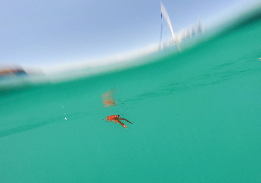 A tuna crab hanging near Agape.
