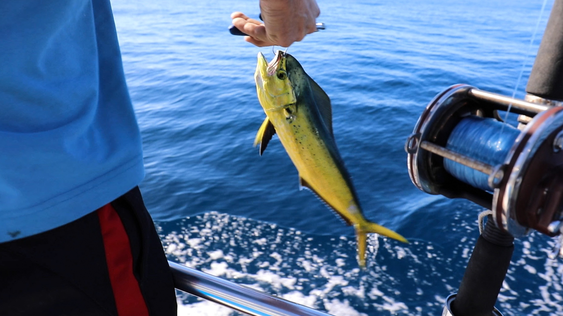 Caught our first mahi. He was just a little guy so we threw him back!