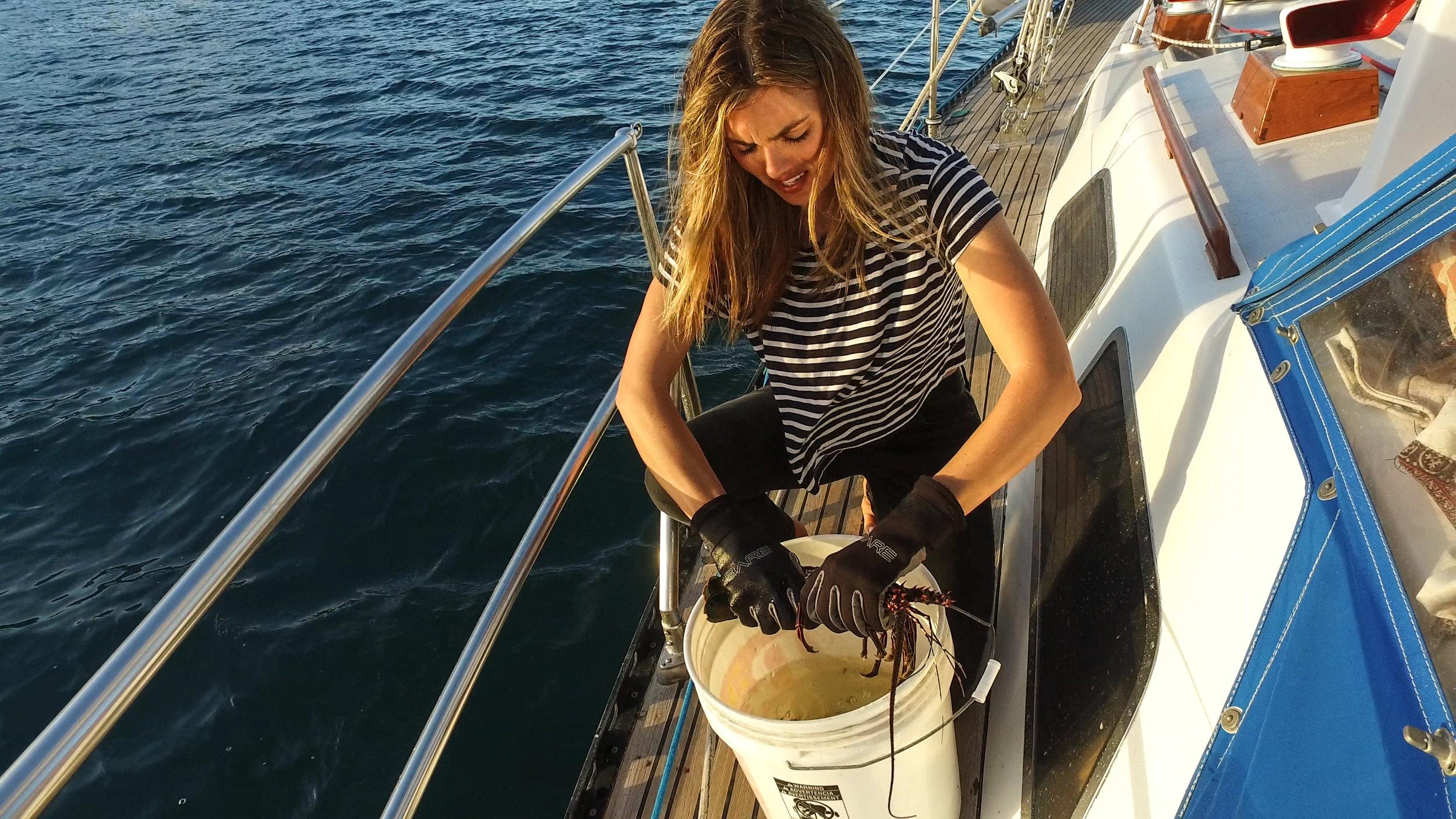 Preparing the lobster for dinner.