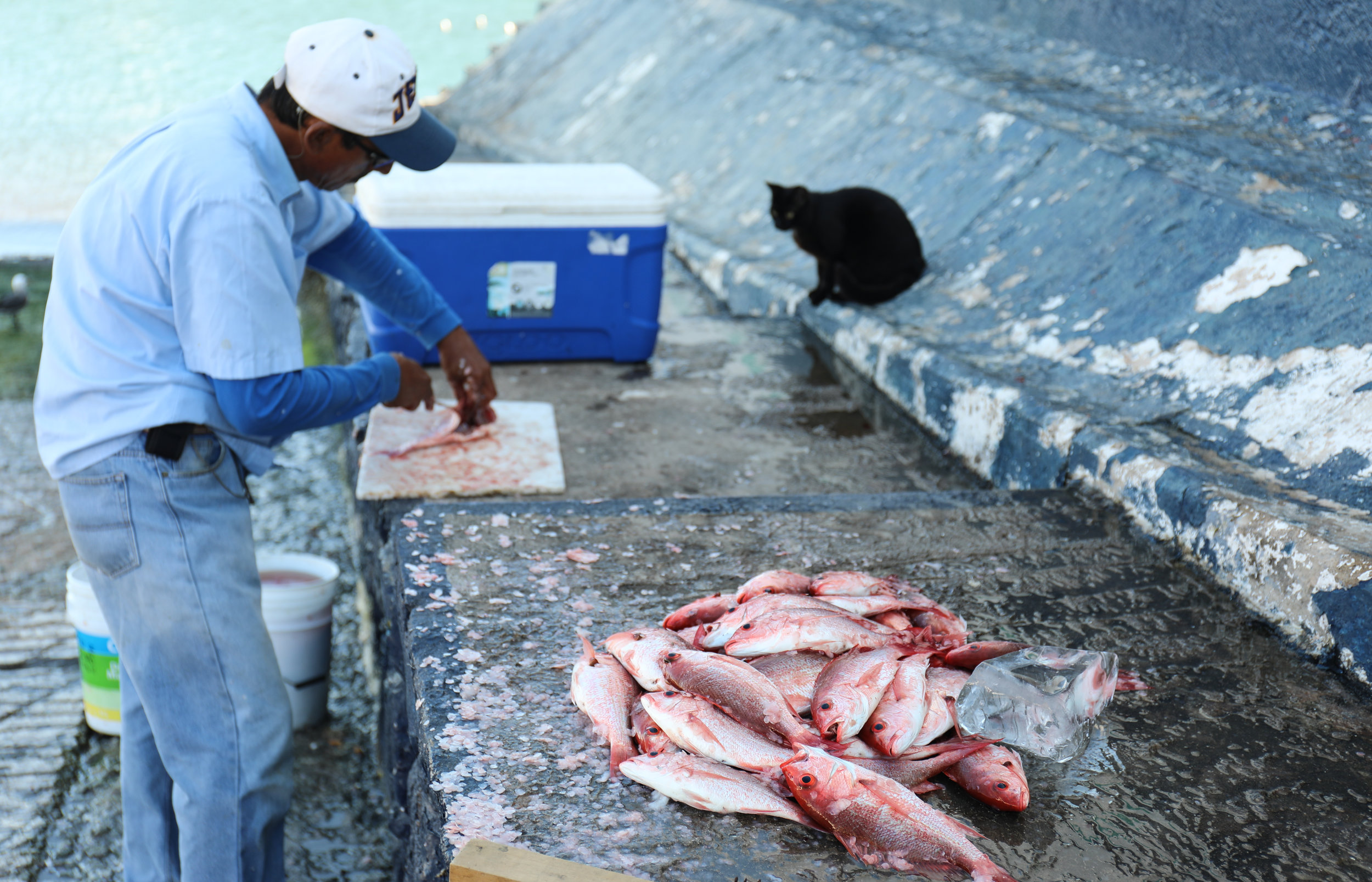There were dozens of cats that would hang around the docks waiting for the fishermen to clean their days catch.