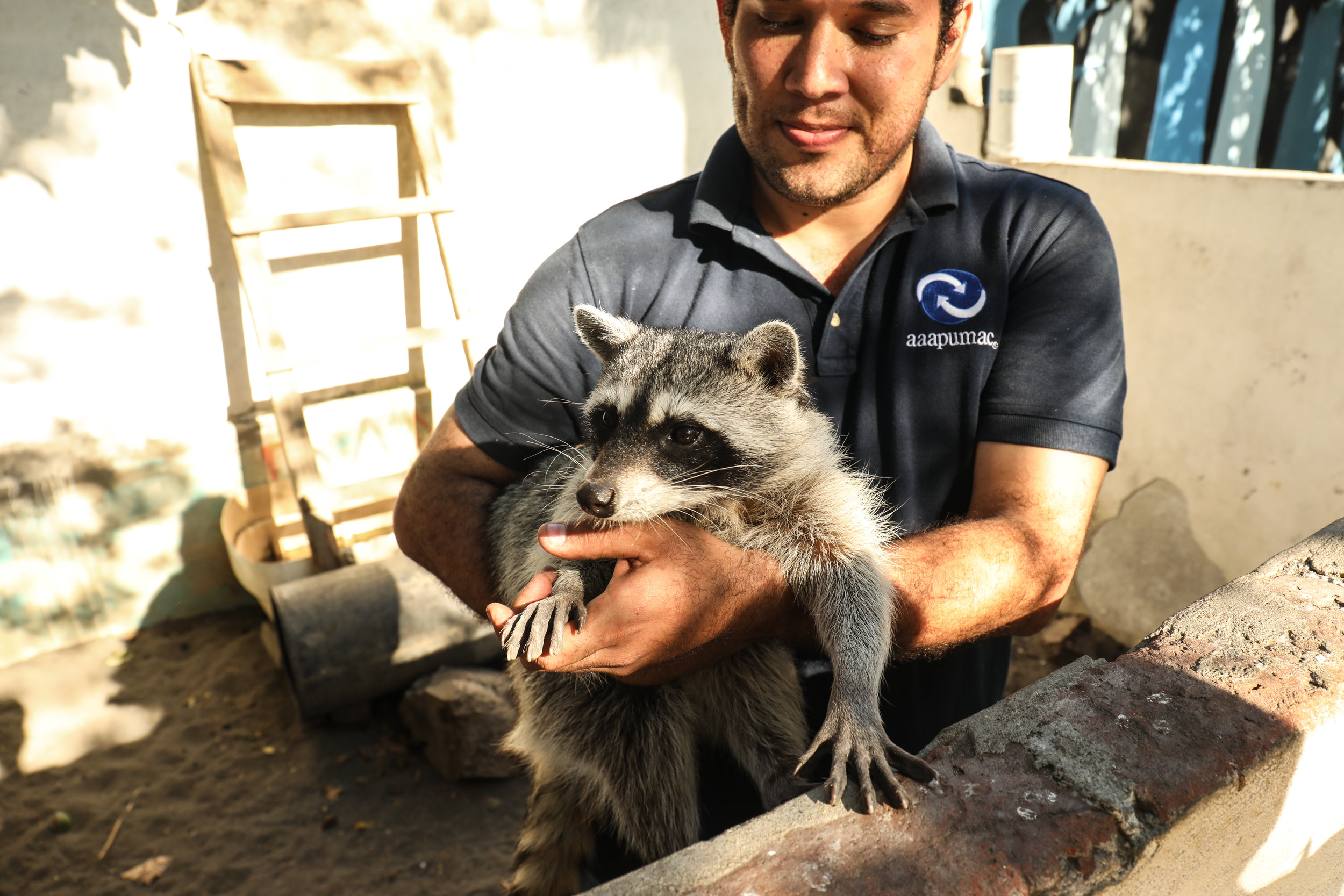 Ramon Junior and one of his raccoons.
