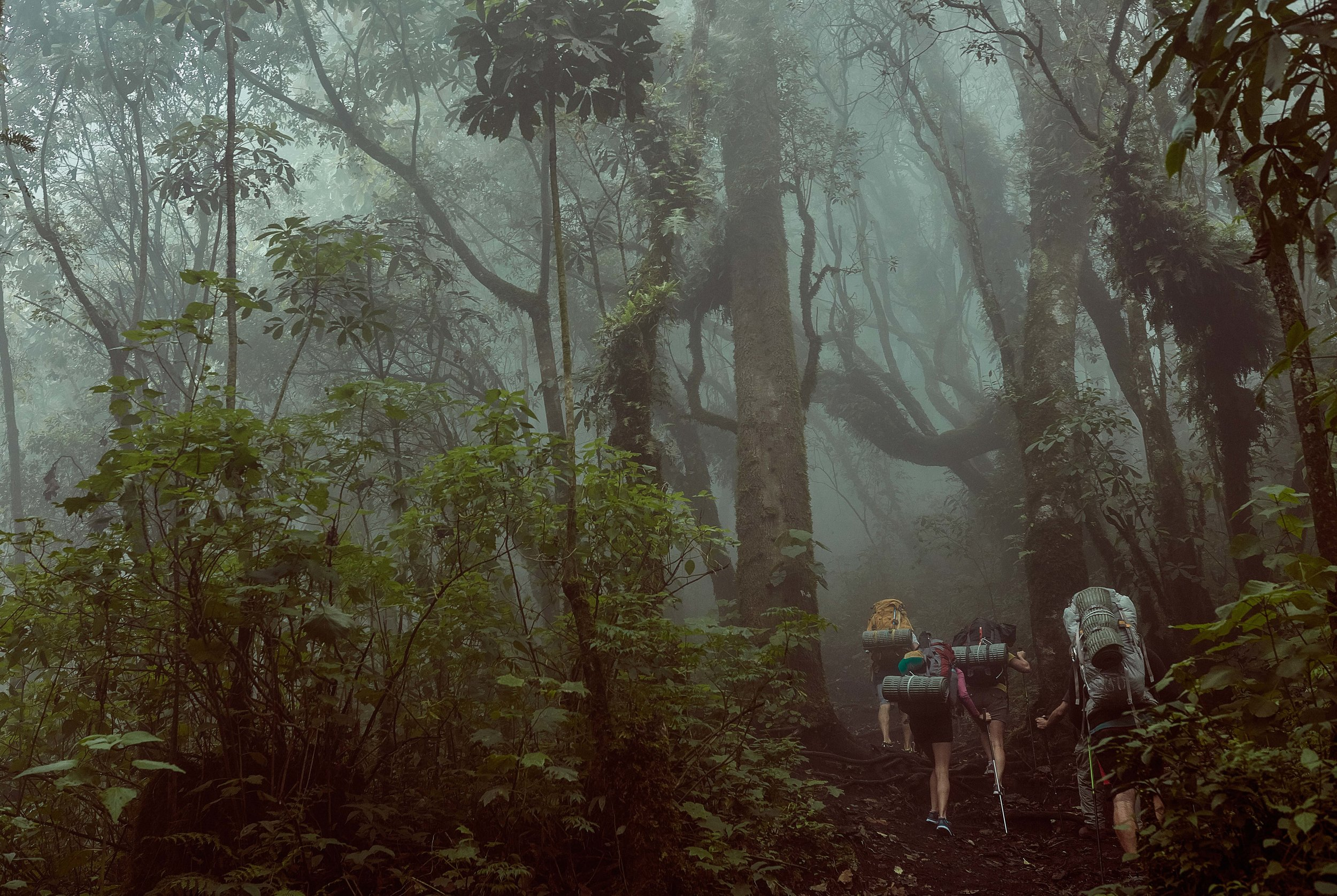 Hiking up through the cloud forest. Photo by Willie Kessel.