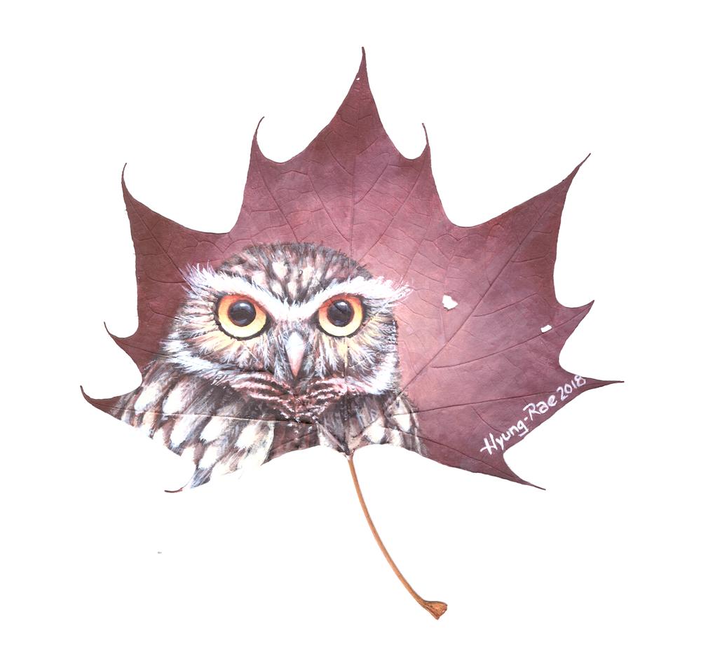 owl -small.jpg