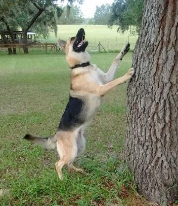 Jett Investigating Squirrels