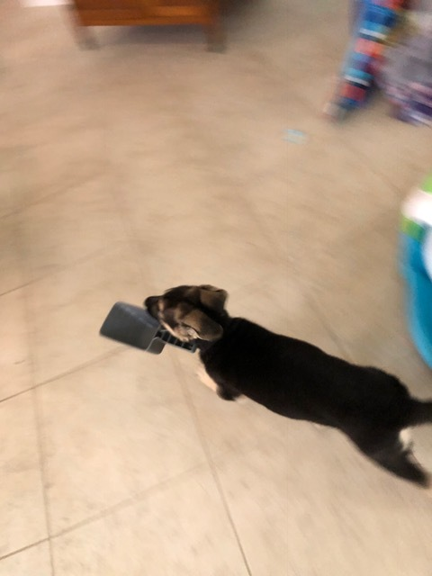 Food Scoop Bandit!