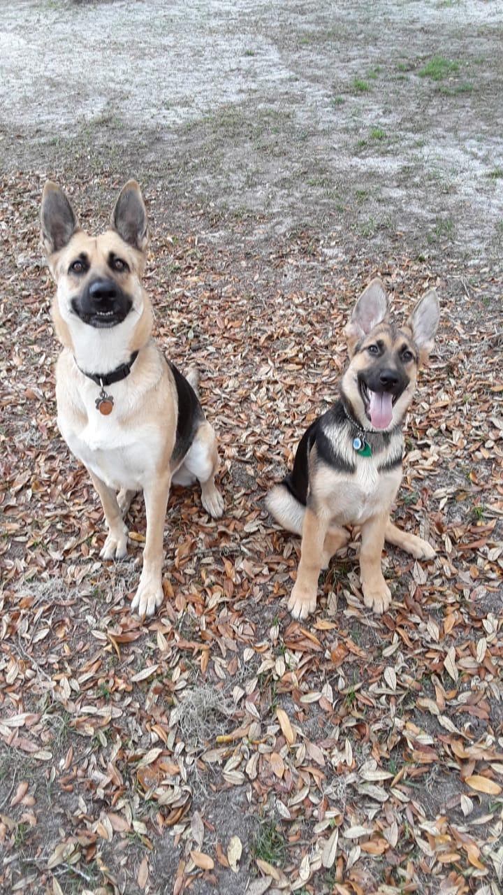 Jett and Java - Best Friends!