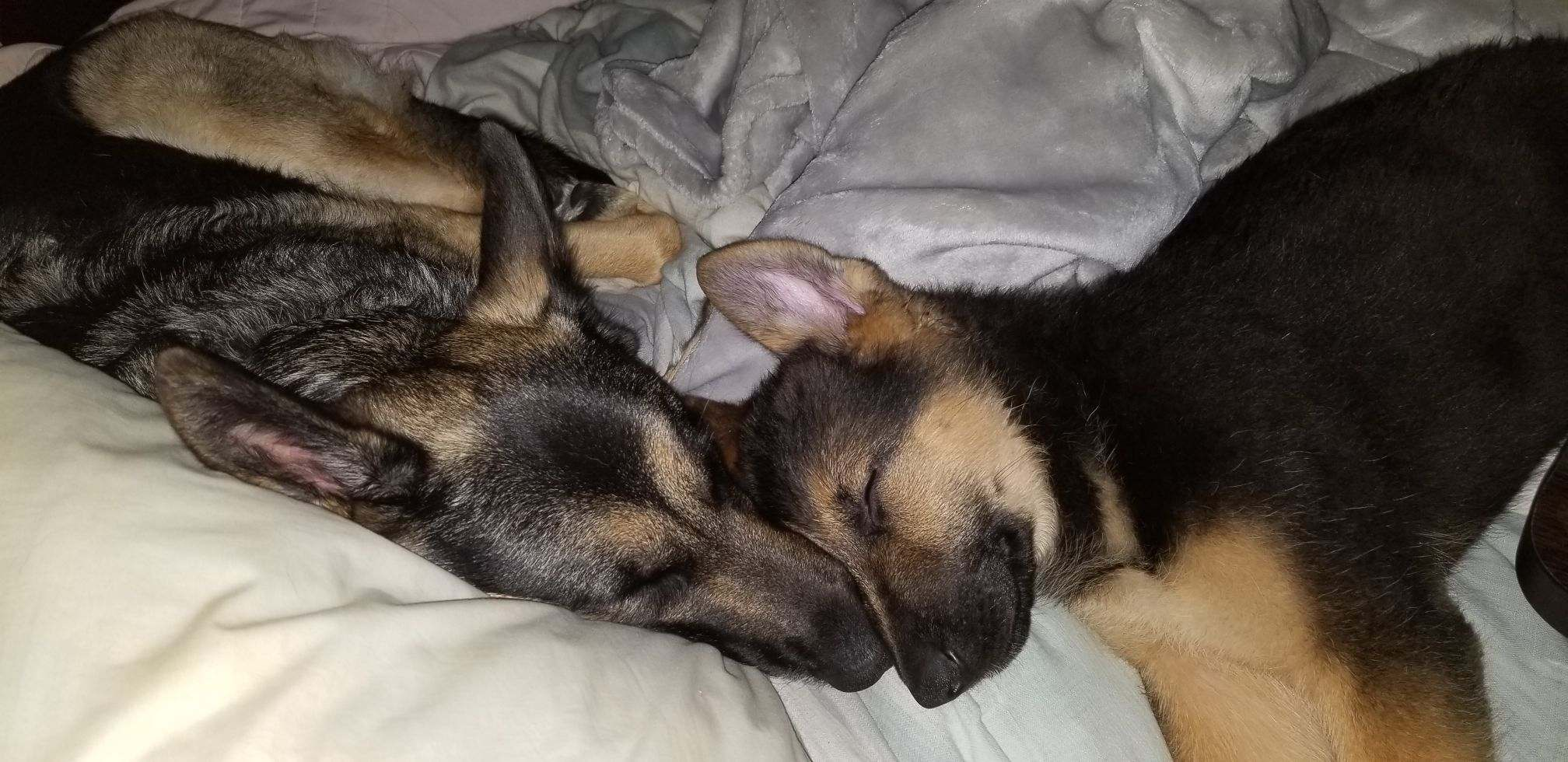 Two Tired Pups!