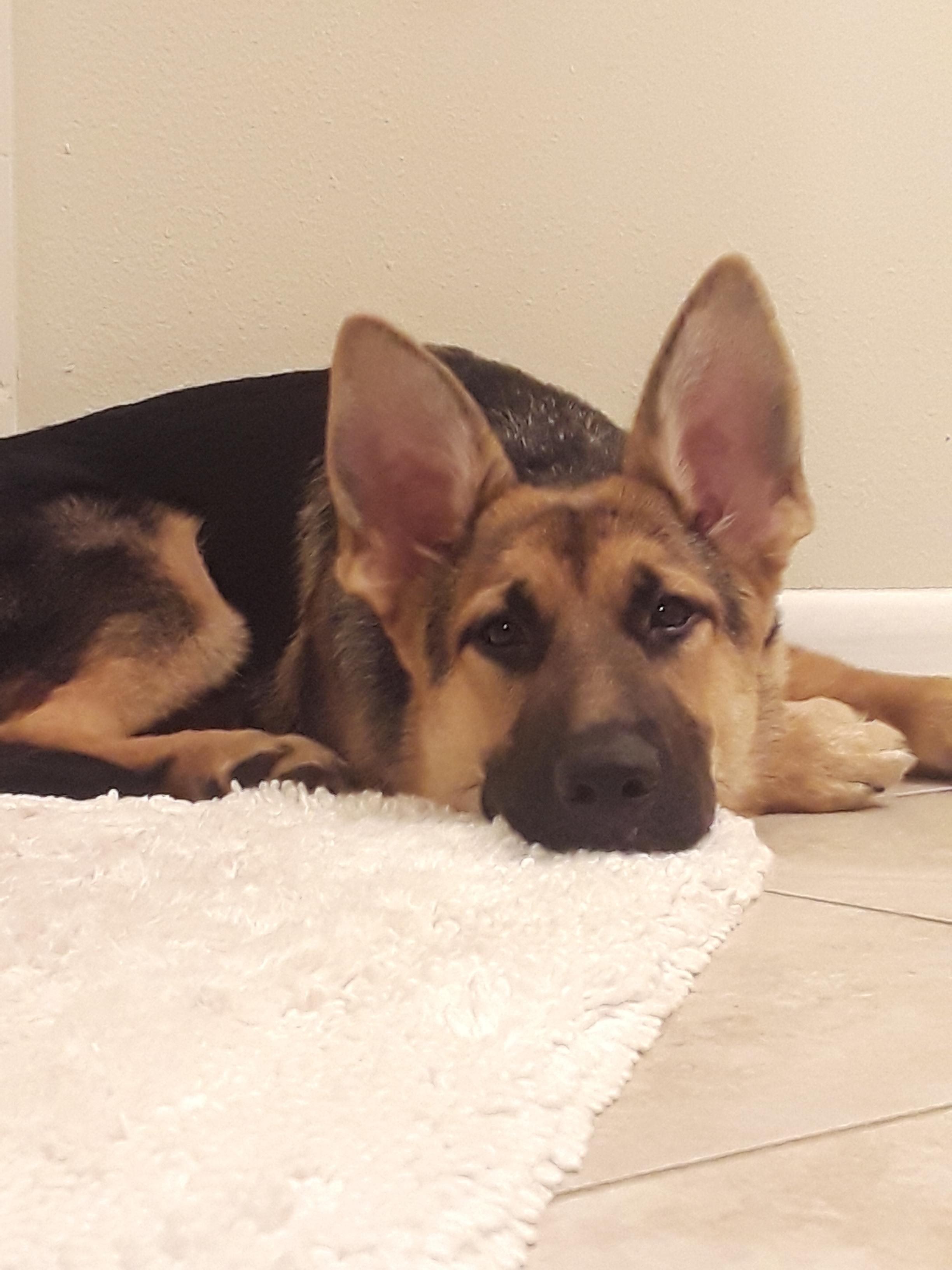 Such a Good Doggo!