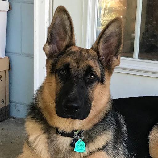 Ninja-Axel at 6 months