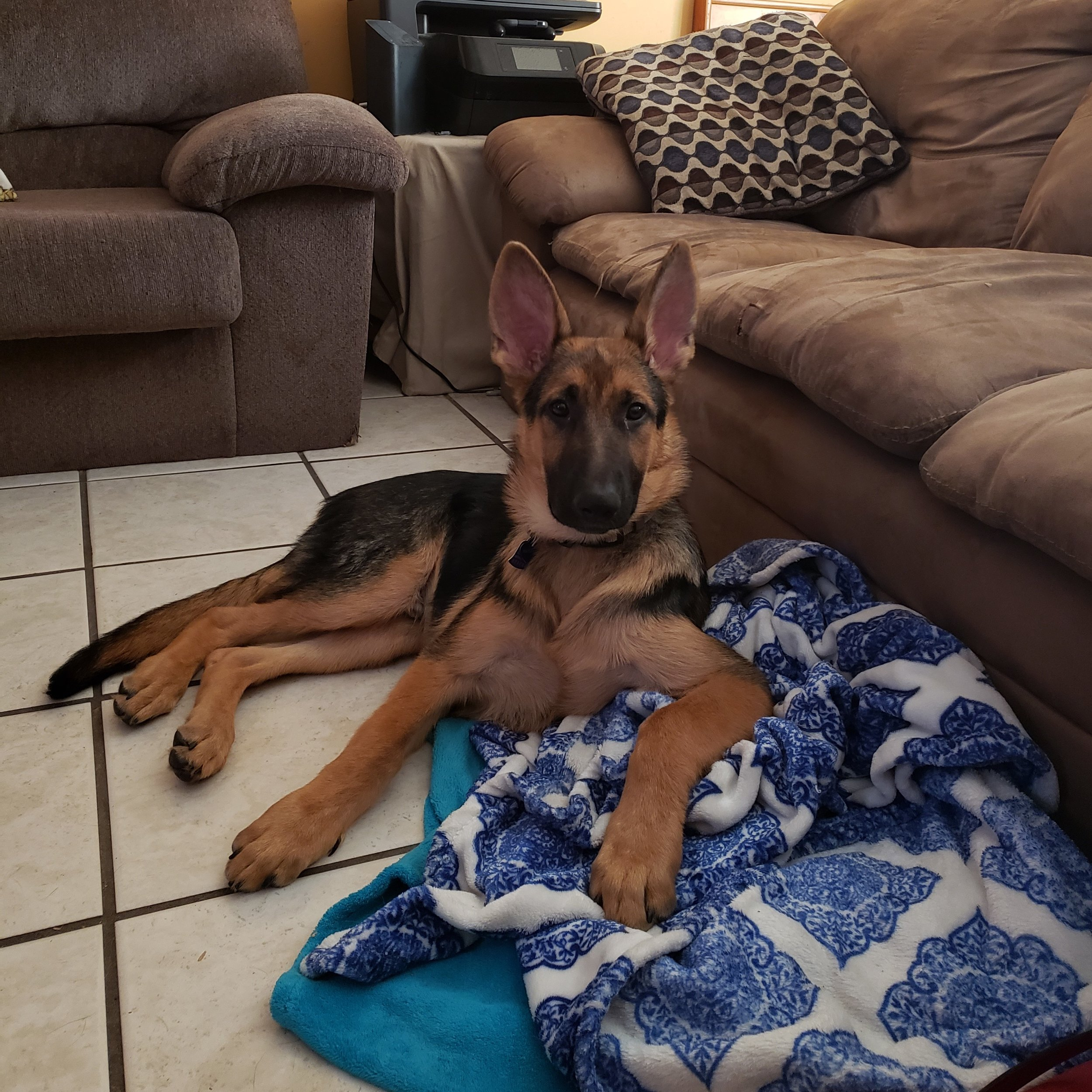 4.5 Months Old - So big and handsome!